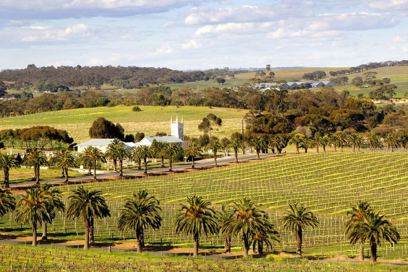 Gnadenfrei Lutheran Church in a view across the Barossa Valley South Australia Agriculture Australian Landscape Barossa Valley Beauty In Nature Church Cloud - Sky Day Field Landscape Nature No People Outdoors Palm Tree Rural Scene Scenics Sky Tree Vineyard