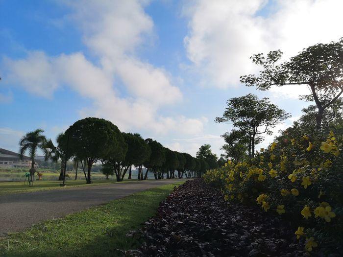 Tree Sky Landscape Cloud - Sky