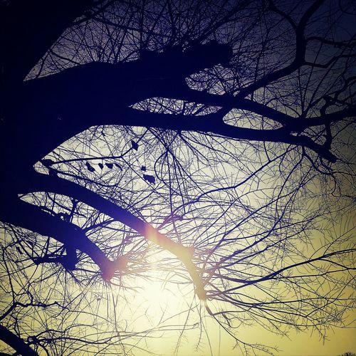 Tree At 姫路城
