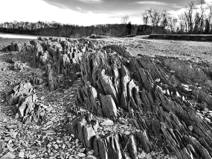 IPhoneography Snapseed Monochrome Textures And Surfaces Nature