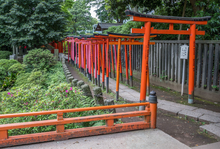Orange wooden gates or Torii at Nezu Shinto Shrine. Toriis are donated by local companies to the shrine for good fortune. Attraction Cultural Culture Gate Heritage Inari Nezu Old Orange Path Row Sacred Shinto Shrine Structure Symbol Temple TORII Tourism Travel Visit Wooden