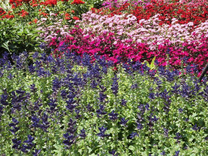 植物 自然 はな 花 はな