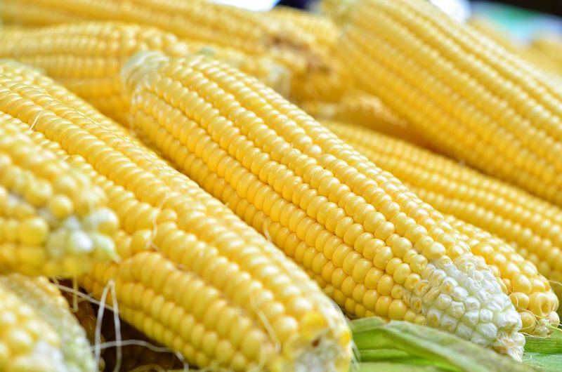 Extreme close up of corn