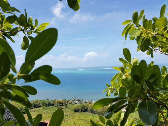 Sea View Tropical Climate Leaf Travel Destinations Beauty In Nature Summer