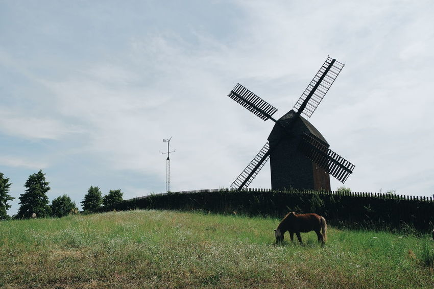 Windmill Horse Field Sunny Day Nature_collection Nature Photography Naturelovers Nature On Your Doorstep