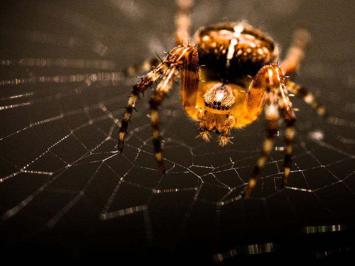 Kreuzspinne Animal Markings Beauty In Nature Close-up Complexity Fine Art Photography Focus On Foreground Fragility Illuminated Kreuzspinne Lumixgx8 Macro Macro Photography Natural Pattern Nature No People Outdoors Selective Focus Spider Spider Web Spinne Spinnennetz Web Showcase July Eyeemphoto Maximum Closeness