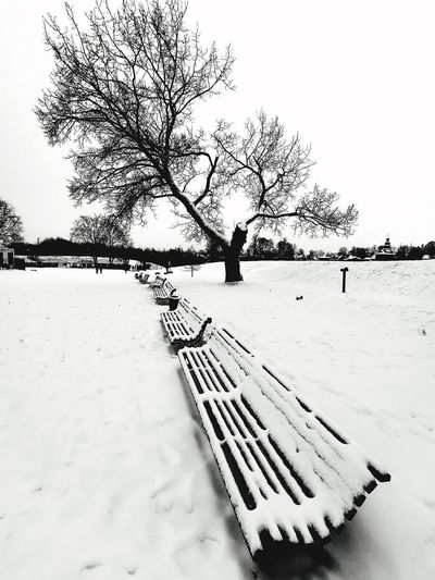 Snow covered trees on field against sky during winter