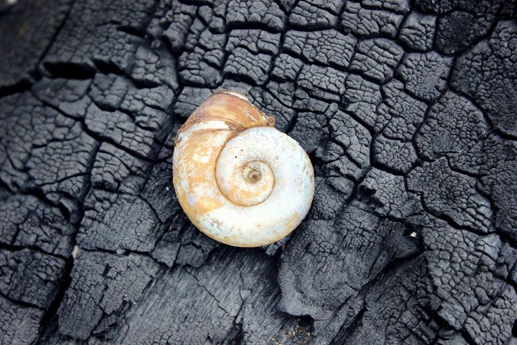 Wooden Vscocam Snails Helix Wildlife Close-up Snail Outdoors Nature Ash Burned On The Way Adventure Club Fine Art Photography Takeover Contrast TakeoverContrast