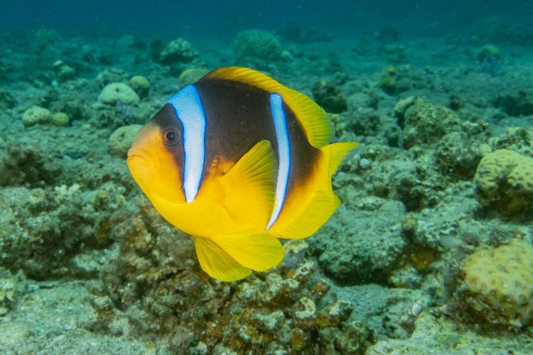 Close-up of yellow fish underwater