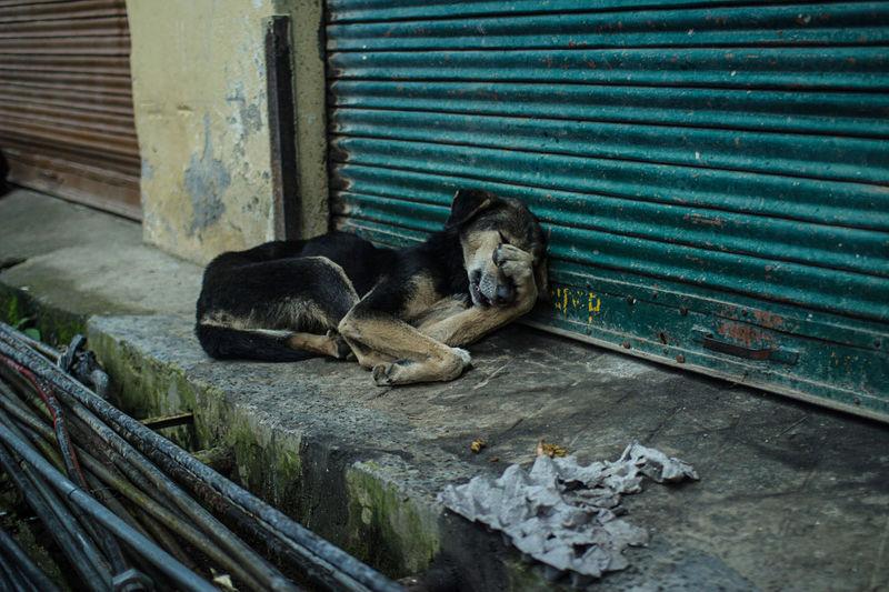 Abdoned Alone Dog Dogslife Mixed Breed On The Streets Sad & Lonely Stray Stray Dog