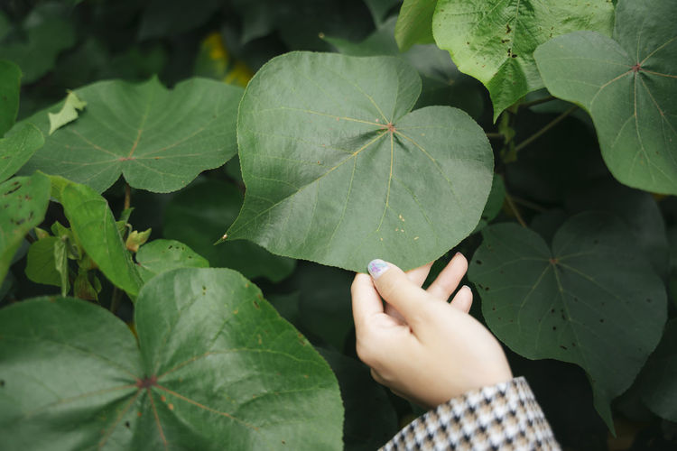 Cropped image of woman holding leaf