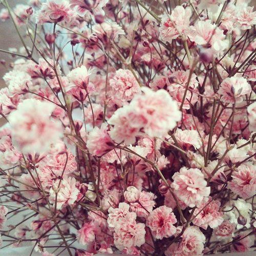 안개꽃 졸업때받았던꽃 어휴 이쁘다