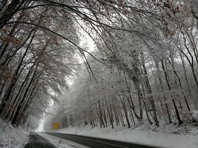 Transportation Winter Snow Road Cold Temperature Car Tree Outdoors Nature