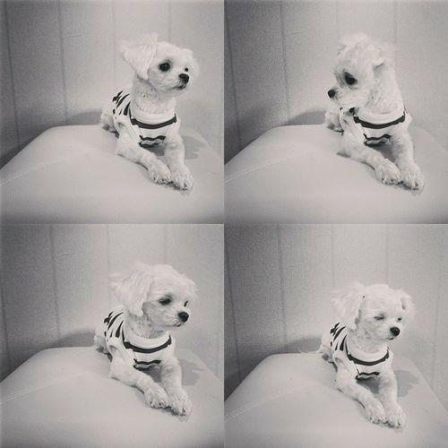 사랑이 분위기쩐다 목욕후 찰칵 PicsArt콜라주4컷흑백