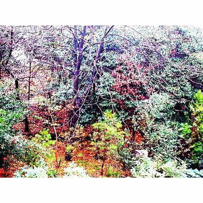 Fall Autumn Leaves Tagsforlikes falltime season seasons instafall instagood TFLers instaautumn photooftheday leaf foliage colorful orange red autumnweather fallweather nature