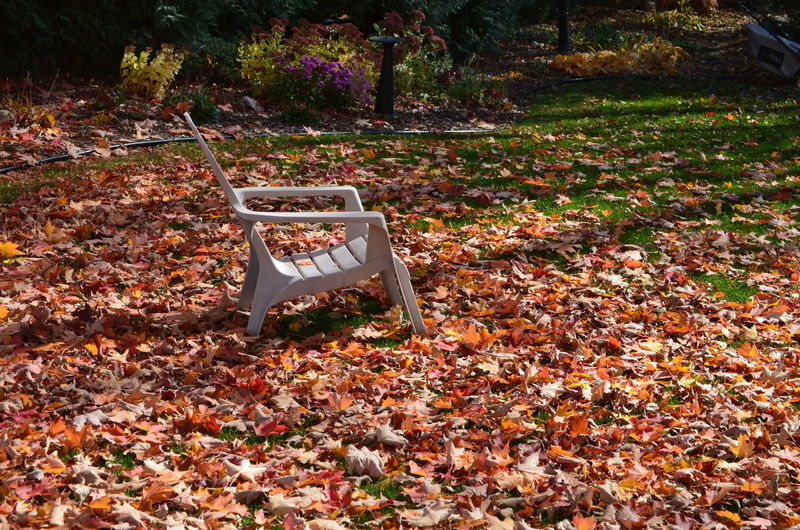 Abundance Autumn Change Fallen Garden Chair Leaf Leafy Lawn Leaves Nature Outdoors Tranquility