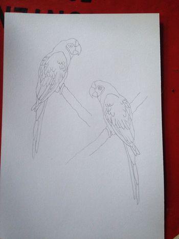 2birds. Draw