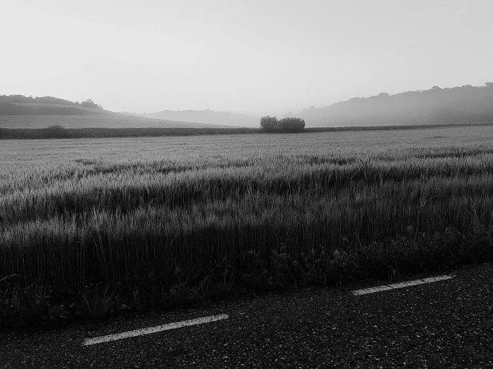 Nature Agriculture Rural Scene Field Growth Farm Tranquil Scene Scenics Landscape Tranquility Beauty In Nature Outdoors No People Day Sky Tree Black And White