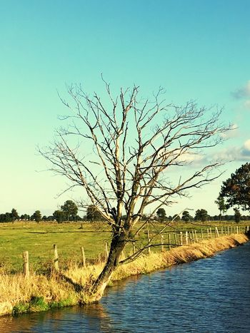 Tree Bare Tree Nature Water Clear Sky Outdoors No People Tranquility River Grass Day Tranquil Scene Growth Scenics Landscape Sky Beauty In Nature IPhoneography