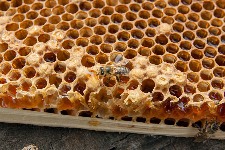 Animal Animal Themes Animal Wildlife Animals In The Wild APIculture Beauty In Nature Bee Beehive Close-up Food Group Of Animals Hexagon Honey Honey Bee Honeycomb Insect Invertebrate Natural Pattern Nature No People