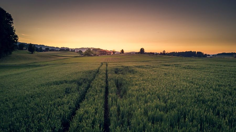 Agriculture Field Landscape Rural Scene Tranquil Scene Farm Beauty In Nature Nature Tranquility Scenics Crop  Growth Outdoors Sunset No People Grass Rice Paddy Sky Day