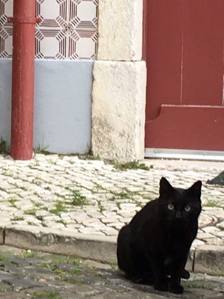El gato negro in Portugal. Nothing but luck for me. Black Color Domestic Cat Animal Themes Friday 13th Domestic Animals Cat