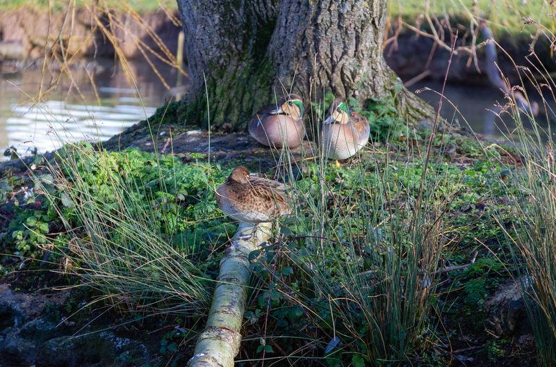 Bird Animal Nature Day Water Tree Trunk Tree Trunk Outdoors Lake Ducks