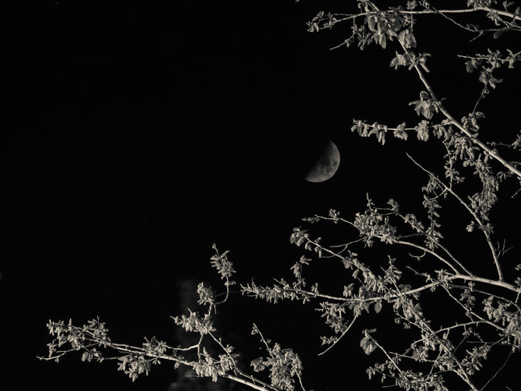 No People Black Background Nature EyeEm EyeEm Nature Lover Tree From My Point Of View Branch Scenics Trees Monochrome Moon Half Moon 2f Monochrome Photograph Limassol Cyprus