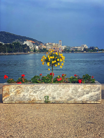View of flowering plants by sea against buildings