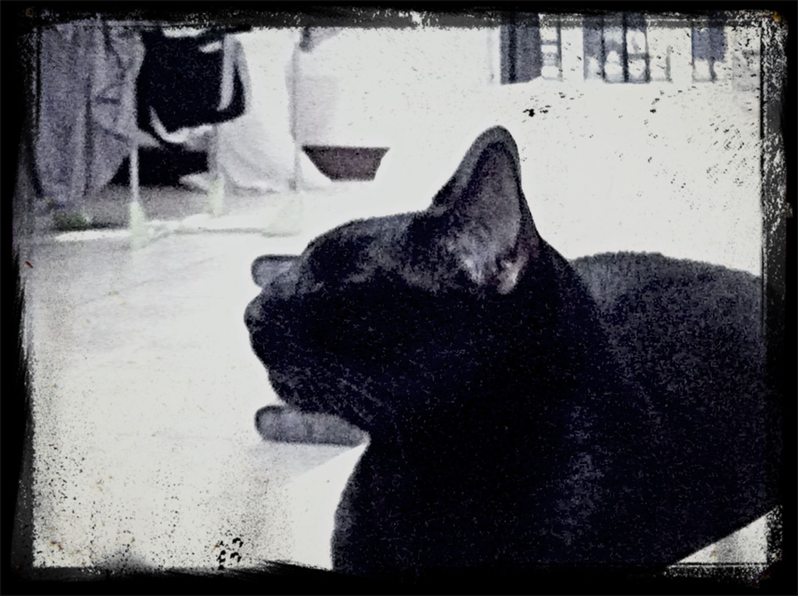 transfer print, auto post production filter, one animal, animal themes, pets, domestic animals, indoors, mammal, dog, relaxation, close-up, resting, sitting, day, home interior, sunlight, sleeping, domestic cat, window, no people