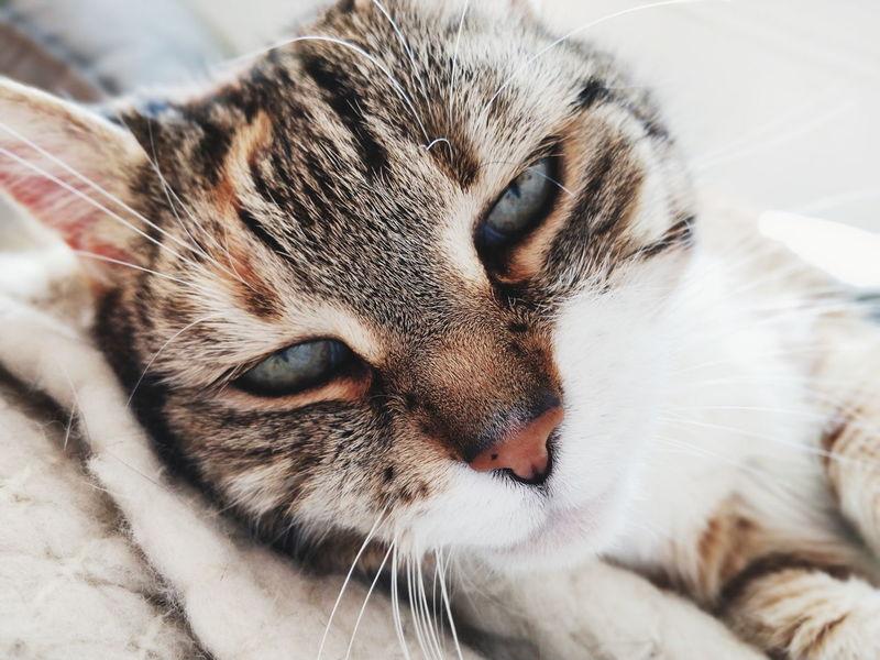 cat cat Pets Portrait Feline Domestic Cat Close-up HEAD Mug Shot Vulture Pyrenees Animal Head  Falcon - Bird Eye Closing Yellow Eyes Snout Tropical Bird Hornbill Animal Eye Whisker Animal Nose Cat Ear Animal Hair