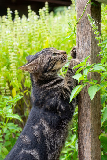 Close-up of a cat on tree trunk