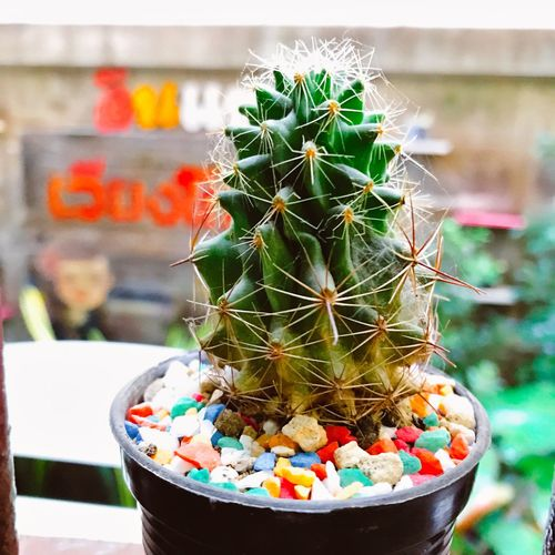 Close-up Plant Growth Freshness Indoors  Fruit No People Nature Day Greenhouse Cactus