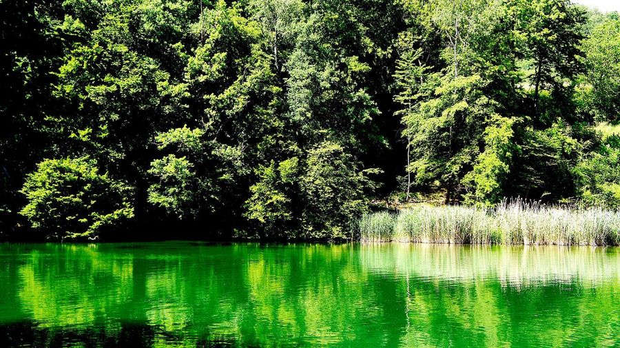 Water Reflection Green Color Nature Tree Beauty In Nature Tranquil Scene Tranquility No People