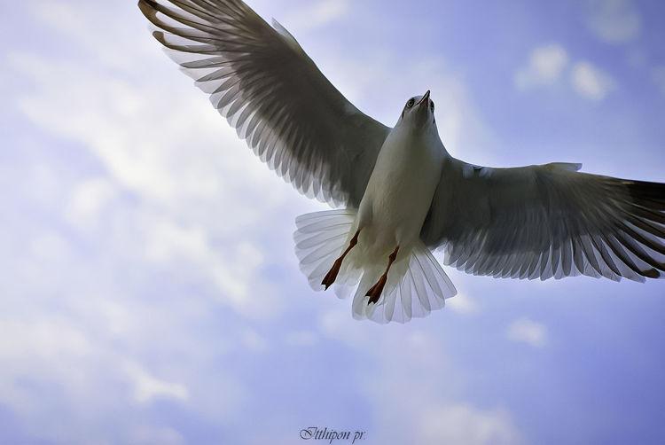 Bird. One Animal