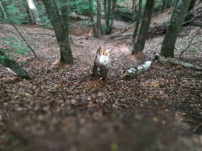 Animal Themes Animal Wildlife Animals In The Wild Bird Day Forest Mammal Nature No People One Animal Outdoors Tree Tree Trunk