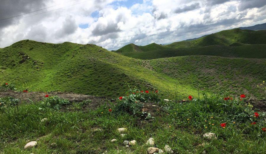 Beautiful Nature Lovely Flowers Breathtaking View Turkmen