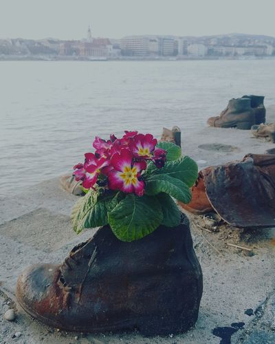 Shoes on the Danube Danube Budapest Boot Peace Remembering Life Petal Purple Flower OldShoes War Shoes River Beach Nature Water Flower Outdoors Horizon Over Water City