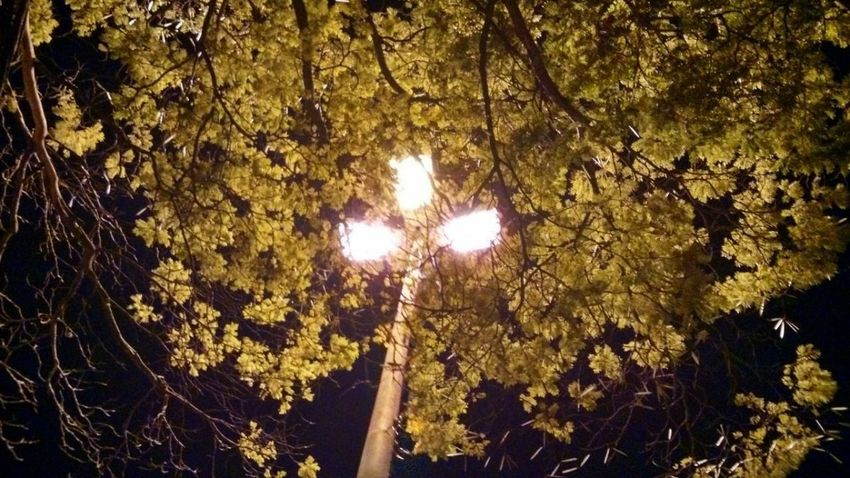 One night with my love Tree Low Angle View Illuminated