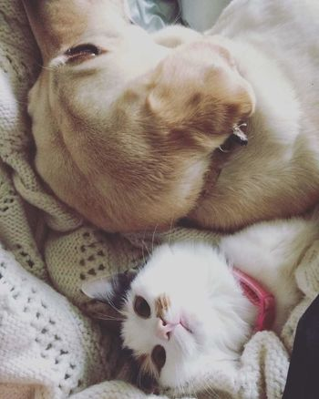 Check This Out Waking Up And Looking At Dog❤ Dog Love Dogs Dog Taking Photos Animal Cats Cat Cat Lovers Cat♡ Cats 🐱 OneLove Animals Animal Photography Onelove♥ Beautiful ♥ Cats Of EyeEm Lovecats❤️