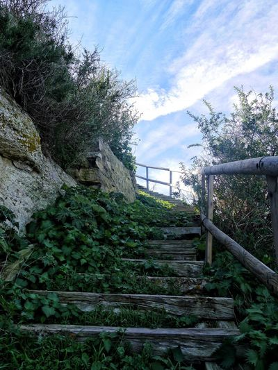 Strairs Stairs In Nature Steps And Staircases Sky Steps Railing Tree Stairs The Way Forward Outdoors Nature No People Low Angle View Day Beauty In Nature Bages Aude Occitanie France