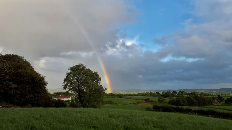 Ireland Irish Countryside Rainbow Tree Rural Scene Field Dramatic Sky Sky Grass Farmland Moody Sky Agricultural Field Atmospheric Mood Cultivated Land