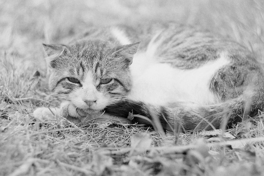 Glum russian cats p. 6 35mm Film CHM Universal 100 Black And White Cat Film Photography Helios 44-2 58mm F2