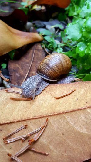 Schnecke Slug Nature Photography Hello World Animal