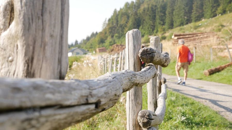 Close-up of horses on wooden post