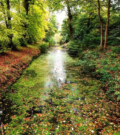 Tree Nature No People Forest Growth Day Outdoors Beauty In Nature Tranquility Green Color Water Scenics Leaf WeekOnEyeEm Windsorpark Perspectives On Nature