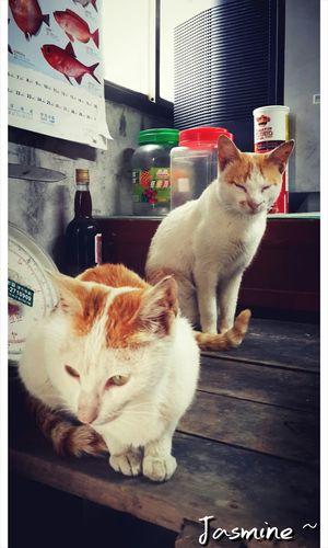 Cat Love Cat Taking Photos Animels