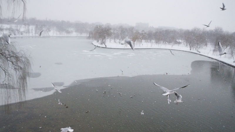 Animal Wildlife Animals In The Wild Beauty In Nature Bird Cold Temperature Day Flying Fog Gull Gulls In Flight Lake Landscape Mammal Nature No People Outdoors Scenics Sky Snow Spread Wings Swan Tree Water Weather Winter