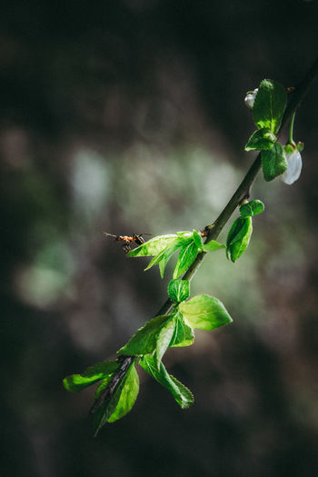 Naturelovers Spring Tree Ants EyeEm Nature Lover EyeEmNewHere First Eyeem Photo Nature Photography Cherry Blossoms Nature Outdoors Cherry Blossom Leaf Insect Close-up Animal Themes Plant Green Color Ant Tiny