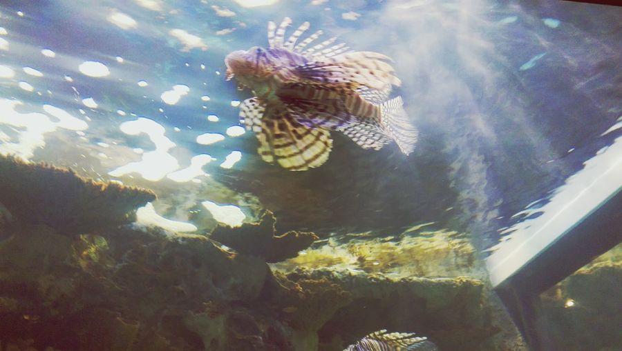 Up close? Swimming Fish Ilovethesea